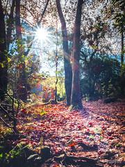 OTOÑO A CONTRALUZ (faustoreinosa) Tags: cantabria hoznayo rio fuentedelfrances efectoseda agua otoño arboles