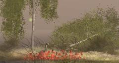 Les bouleaux........... (zaziaa resident) Tags: littlebranch wildbirch tmdevent lostdreams sim