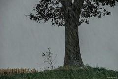 I am not happy.... (Joe Hengel) Tags: iamnothappy ephratapa pennsylvania pa tree silhouette lancastercounty grass snow snowy fall field