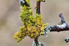 lichens (Hugo von Schreck) Tags: hugovonschreck