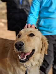 00100lPORTRAIT_00100_BURST20181228151015493_COVER (KevinXHan) Tags: zions national park dog golden retriever cute aww parus trail hike walk nature outdoors google pixel3 photoblog photodiary