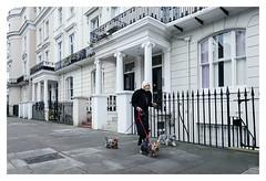 Old lady walking three dogs on the streets of London (London professional photographer.) Tags: streetphotographer streetphotograhpy professionalphotography londonstreetphotography streetphotographybylondonphotographernikolaymirchev london greaterlondon england gbr candid photography street urban woman dogs holland park