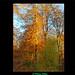 Interlude © En forêt de Verte-5/5
