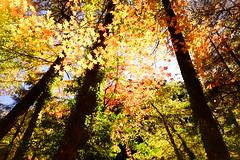楓之谷 (hundredspring) Tags: 楓之谷 楓紅 溪谷 溪瀑 秋 碧綠溪 落葉