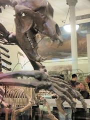 Cave Bear Claws (edenpictures) Tags: fossil bones skeleton skull prehistoric extinct mammal newyorkcity nyc manhattan americanmuseumofnaturalhistory amnh naturalhistorymuseum museum upperwestside