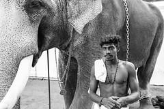 Portraits of India (Geraint Rowland Photography) Tags: portrait portraitphoto naturalportraits portraitsofindia indianman elephant elephantfestival animal animalcruelty animalhandler elephantrider elephanthandler anelephantwithitshandleratafestivalinkochiinkerala india blackandwhite face human chains kochi cochin cereal southindia festival wwwgeraintrowlandcouk geraintrowlandphotographyinindia