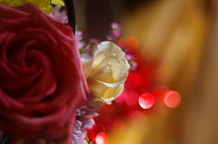 Roses and lights (Baubec Izzet) Tags: baubecizzet pentax bokeh roses flower nature flickrunitedaward