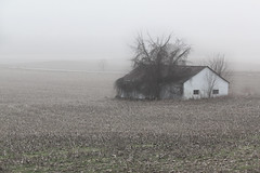 Fields of Mist (d-stop) Tags: dstop 2019 swont southwestontario ontario canada adelaide hwy22 egermontrd field mist fog january winter misty foggy muted brown calm house tree farm rural farmland