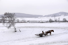 Cart (MelindaChan ^..^) Tags: innermongolia china 内蒙古 cart farmer life people winter snow cold tree chanmelmel mel melinda melindachan horse white 雪 plant nature 冰 bashang 壩上