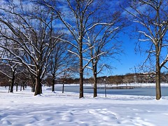 snow & pond (ekelly80) Tags: dc washingtondc january2019 winter snurlough snow snowstorm shutdown trumpshutdown snowday snowywalk white snowy nationalmall constitutiongardens snowcovered tree sunny pretty
