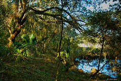 Shady Backwater (surfcaster9) Tags: water shade trees marsh florida lumixg7 outside panasonic outdoors