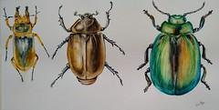 Escarabajos (benilder) Tags: acuarela aquarelle watercolor watercolour beetles lescoléoptères escarabajos benilde arte art