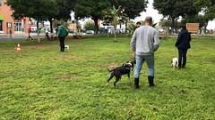 IMG_8655 (Doggy Puppins) Tags: educación canina adiestramiento canino perro dog