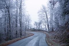 Evading the Edge (oldoinyo) Tags: trees ice glazing freezingrain icestorm northcarolina