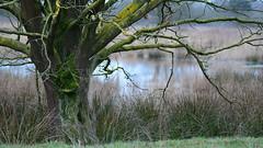 DSC_8957_00001 (frans.oost) Tags: dawn tree lake landscape abigfave