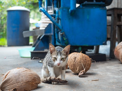 mekong (montageroom1) Tags: olympus em5 1240 vietnam hcmc asia travel street メコン ホーチミン ベトナム cat coconuts