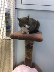 Holland - 3 year old neutered male