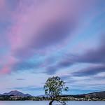 The Wanaka Tree-15 thumbnail
