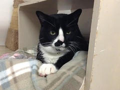 Ernie - 3 year old neutered male