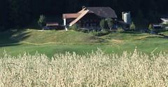 DSC05666 (ursrüegsegger) Tags: linden juli august getreideernte bauernhöfe landschaft regenbogen