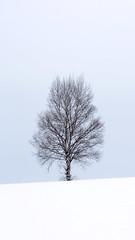 Skeleton tree in winter. (T.Kanokpol) Tags: skeleton tree winter biei hokkaido japan