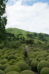 Old Tablelands (Heart felt) Tags: spring newzealand wairarapa gardens richmondgarden carterton tepuhigarden featherston oldtablelands martinborough pukahagardentour sadie hugo nature