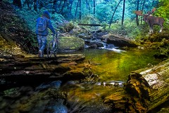 Guardian Of The Woods (☼☼ 84'F Here Today!!!☼☼) Tags: duc guardianofthewoods man bike stream logs moose wilderness falls photobackgroundrogerjohnson watching shadow
