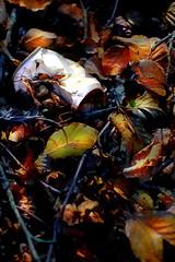 """ Natura Morta- Still life "" (Lillux1971) Tags: natura nature autunno autumn autumncolors autumnleaves colori coloriautunno trash rifiuti naturamorta stilllife lillo1971 foglie rami"