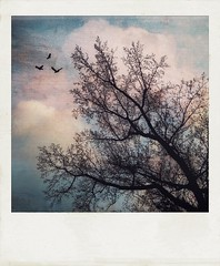 (jeanne.marie.) Tags: treescape polaroid textured mydailywalk autumn cloudy clouds sky blue pink iphone7plus iphoneography flight birds tree silhouettes