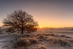 Sunrise (michel1276) Tags: sunrise sonnenaufgang sonne heide westruperheide nordrheinwestfalen deutschland germany landschaft landscape batis1828 batis2818 sonya7iii