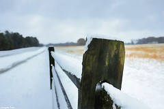 The snow (gusdiaz) Tags: snow storm ice fence country farm fuji fujifilm nieve granja cold frio winter invierno campo diciembre december bokeh textura texture hdr icy hielo xt2