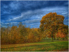 last of my autumn (Andy Stones) Tags: centralpark autumn autumnal colour colourful trees leaves grass sky skywatching clouds cloud scunthorpe lincolnshire northlincs northlincolnshire nlincs image imageof imagecapture photography photoof outdoors outside