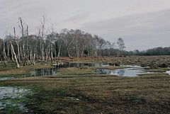 new forest ii (Benedict Flett) Tags: newforest nationalpark film analogue england winter