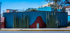 2018 - Mexico - Oaxaca - Cacti + (Ted's photos - Returns late Feb) Tags: 2018 cropped mexico nikon nikond750 nikonfx oaxaca tedmcgrath tedsphotos tedsphotosmexico vignetting cacti cactus oaxacaoaxaca streetscene street bluesky blue shadow shadows wideangle widescreen