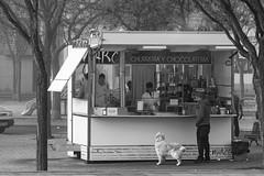 _DSC0718 (hechizodeluna) Tags: churrería niebla persona perro churrero caseta blancoynegro animal chocolatería frio compasión mirada