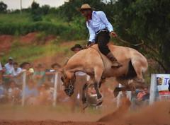 Pierre e Cartel da Coronilha (Eduardo Amorim) Tags: gaúcho gaúchos gaucho gauchos cavalos caballos horses chevaux cavalli pferde caballo horse cheval cavallo pferd pampa campanha fronteira quaraí riograndedosul brésil brasil sudamérica südamerika suramérica américadosul southamerica amériquedusud americameridionale américadelsur americadelsud cavalo 馬 حصان 马 лошадь ঘোড়া 말 סוס ม้า häst hest hevonen άλογο brazil eduardoamorim gineteada jineteada
