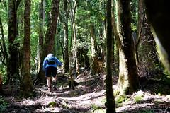 20190113-07-Hiking up Mt Wedge (Roger T Wong) Tags: 2019 australia mtwedge rogertwong sel24105g sony24105 sonya7iii sonyalpha7iii sonyfe24105mmf4goss sonyilce7m3 tasmania bushwalk forest hike outdoors southwest tramp trek walk