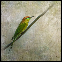 Green bee-eater on a wire (ulli_p) Tags: asia aworkofart bird birds canon750d flickraward beeeater nature ruralthailand southeastasia thailand texture textured texturedphoto