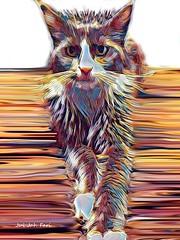 (c) Maine-Coon-Cat / Smokey (Jui Jah Fari) Tags: mainecoon katze cat mainecooncat art artistic kunst künstler artwork kunstwerk digital photopaint painting juijahfari tier animals smokey fotokunst paint digitalart