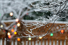 snowy-day bokeh poetry (karma (Karen)) Tags: baltimore maryland home backyard branches snow fences lights dof bokeh hbw topf25