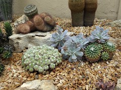 Chicago, Garfield Park Conservatory, Desert Room, Cactus Medley (Mary Warren 11.6+ Million Views) Tags: chicago garfieldparkconservatory garden park nature flora plants green leaves foliage desert desertroom cactus cacti stones rocks