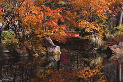 Autumn reflections (Irina1010) Tags: pond water reflections november maples trees colorful foliage orange gibbsgardens autumn nature canon 2018 coth5
