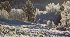Hoarfrost (2000stargazer) Tags: kalandseidet bergen norway hoarfrost forest morninglight shadows nature winter landscape canon trees november
