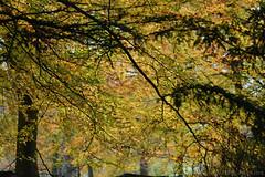 Autumn Branches (Bri_J) Tags: chatsworthhousegardens bakewell derbyshire uk chatsworthhouse gardens chatsworth statelyhome nikon d7500 autumn branches fall