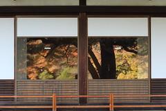 Japanese Garden through Shoji (seiji2012) Tags: 東京 公園 旧岩崎邸庭園 紅葉 モミジ 障子 日本庭園 ガラス tokyo japan garden autumn fall foliage happyplanet asiafavorites