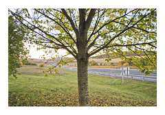 _PRE8323 (Jordane Prestrot) Tags: ♎ jordaneprestrot route road ruta autoroute highway autopista arbre tree árbol crépuscule dusk crepúsculo