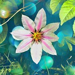 Fergus Ontario ~ Canada  ~ Temphen Gardens ~ Heritage thumbnail