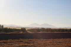 IMG_10425 (mudsharkalex) Tags: california byron byronca mountdiablo mtdiablo