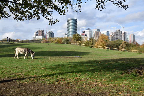 Canary Wharf skyline from Mudchute City Farm