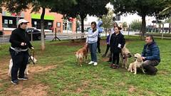 IMG_8480 (Doggy Puppins) Tags: educación canina adiestramiento canino perro dog